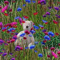 flowery-5371296_1920